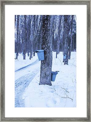 Vermont Maple Syrup Buckets Framed Print by Tom Singleton