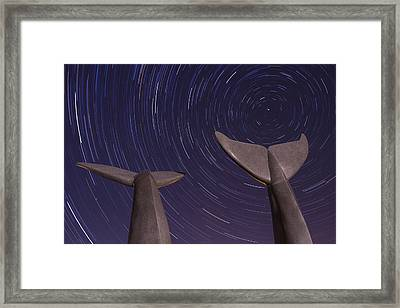 Vermont Night Landscape Star Trails Whale Tails Framed Print by Andy Gimino