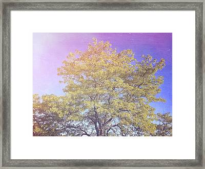 Vermont Tree Light Leak Sunflare  Framed Print by Andy Gimino