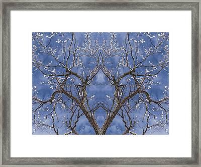 Vermont Winter Mirror Trees Snow Sky Framed Print