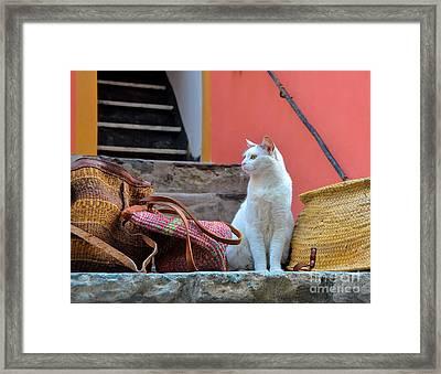 Vernazza Shop Cat Framed Print