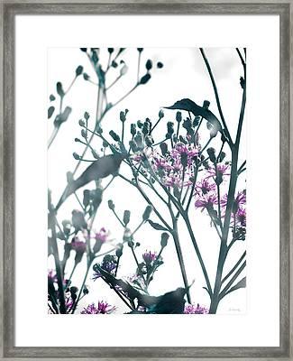 Vernonia  Framed Print by Shawna Rowe