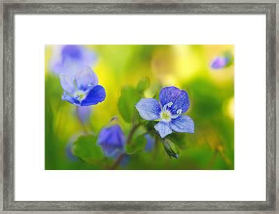 Veronica Spring Framed Print