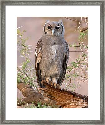 Framed Print featuring the photograph Verreaux Eagle-owl by Chris Scroggins
