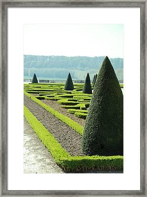 Versailles Topiary Garden Framed Print by Jennifer Ancker