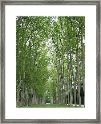 Framed Print featuring the photograph Versailles Tree Garden 2005 by Cleaster Cotton