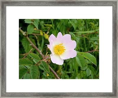 Vert Jaune Rose Framed Print