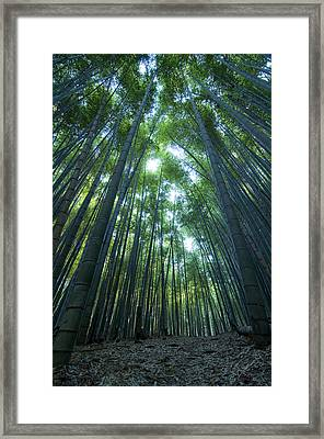 Vertical Bamboo Forest Framed Print by Aaron Bedell