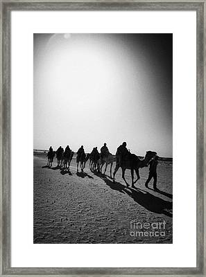 vertical hot sun beating down on sands and camel train in the sahara desert at Douz Tunisia Framed Print by Joe Fox