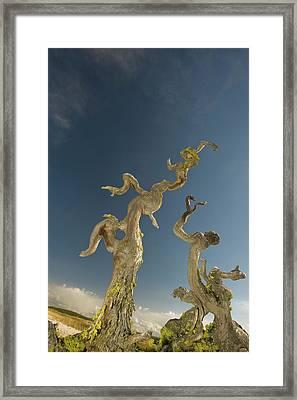 Vertical Tree Roots In Upper Geyser Framed Print