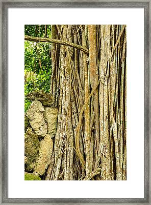 Vertical Vines Framed Print
