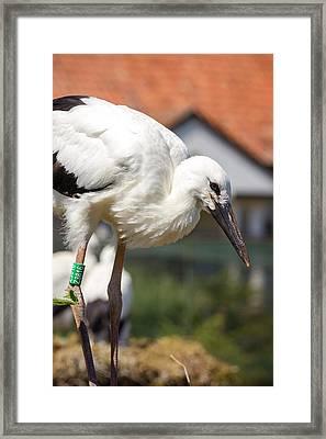 Vertical Young Stork Framed Print
