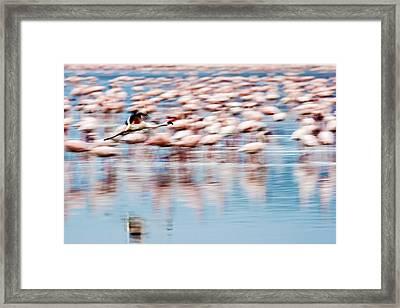 Framed Print featuring the photograph Vertigo by Antonio Jorge Nunes