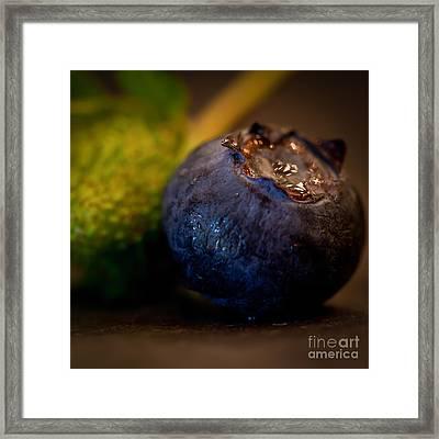 Very Blueberry Square Framed Print by Patricia Bainter