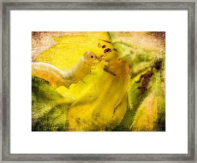 Very Hungry Caterpillar Framed Print by Yvon van der Wijk