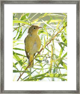 Very Yellow Warbler Framed Print