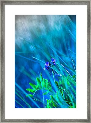 Framed Print featuring the photograph Vetch In Blue by Adria Trail
