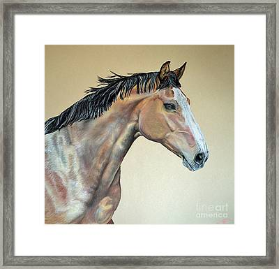Veterinarian's Warm Blood Horse Framed Print by Ann Marie Chaffin