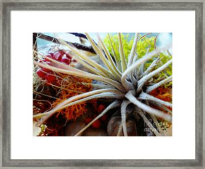 Framed Print featuring the photograph Vibrant by Arlene Sundby