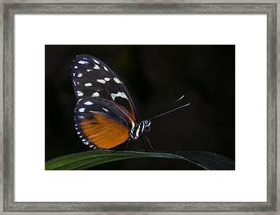 Vibrant Beauty Framed Print
