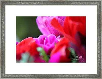Framed Print featuring the photograph Vibrant Bouquet  by Lynn England