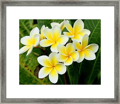 Vibrant Framed Print by Debbie Howden