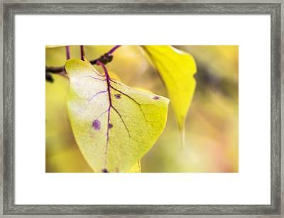 Vibrant Leaves Framed Print by Dana Moyer