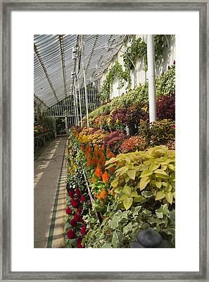 Vibrant Life Palm House Ireland Framed Print by Betsy Knapp