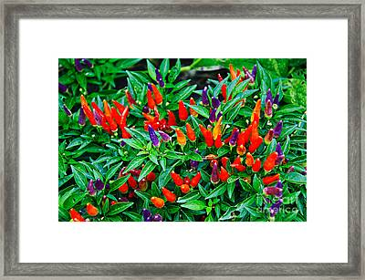 Vibrant Sweet Peppers Framed Print by Andee Design