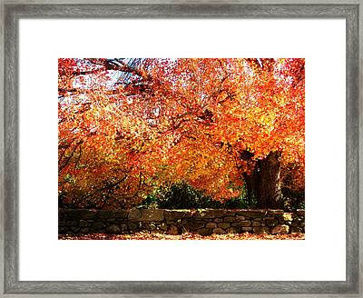 Vibrant Tree Framed Print
