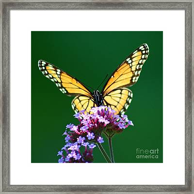 Viceroy Butterfly Square Framed Print by Karen Adams