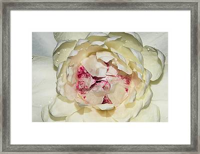 Victoria Amazonica Flower Close-up Framed Print by Keren Su