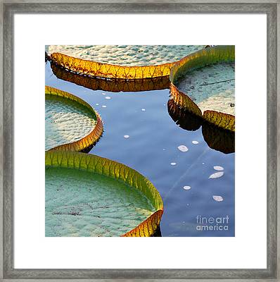 Victoria Waterlilies Framed Print