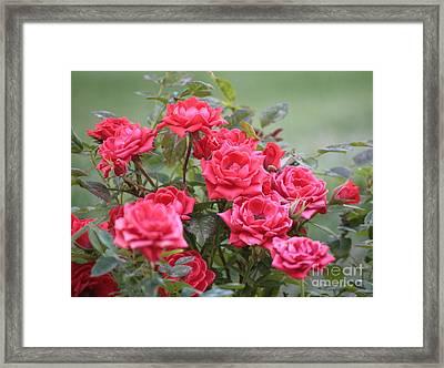 Victorian Rose Garden Framed Print by Carol Groenen