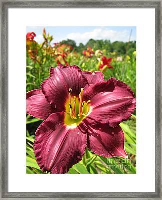 Viette's Daylily. Dark Purple 01 Framed Print