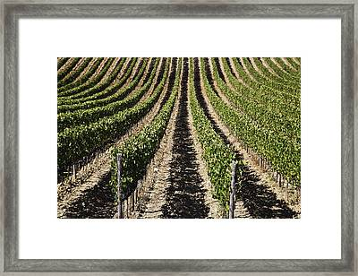 View Down The Row Of Vines Framed Print