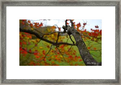 View From A Tree Framed Print by Alex King