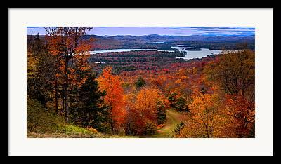 Fall Folage Framed Prints