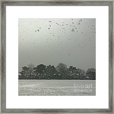 View From My Home Right Now.  Seagulls Framed Print