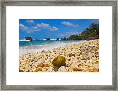 View From The Coconut Framed Print