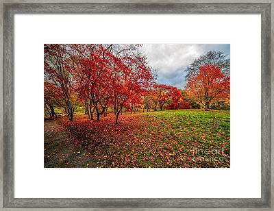 View Of Autumn Framed Print by Adrian Evans