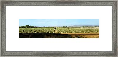 View Of Cantaloup Field, Costa Rica Framed Print by Panoramic Images