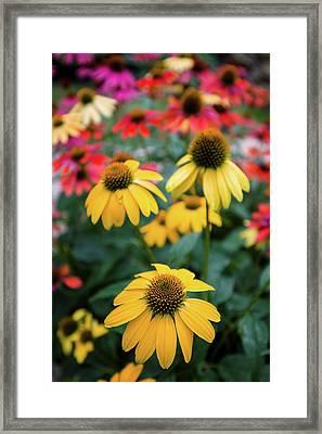 View Of Flowers In A Garden, Garden Framed Print