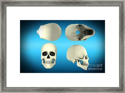 View Of Human Skull From Different Framed Print by Stocktrek Images