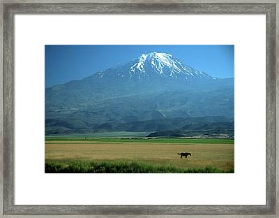View Of Mount Ararat In Turkey Framed Print by Cagan H. Sekercioglu