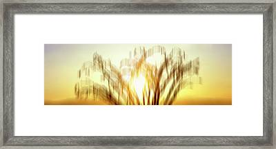 View Of Ocotillo Cactus At Dusk Framed Print