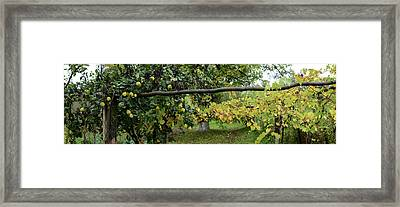 View Of Pear Trees, Bradu, Arges Framed Print