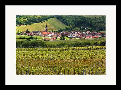 Vineyards Of Alsace Photographs Framed Prints