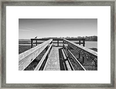 View Of The Elkhorn Slough From A Platform.  Framed Print