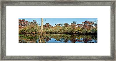 View Of Trees At Marsh, Barrier Framed Print
